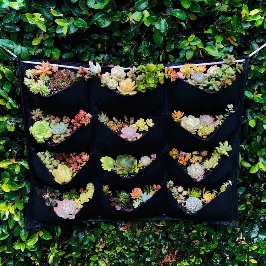 Hanging Succulent Garden Ideas -incandescentbloom