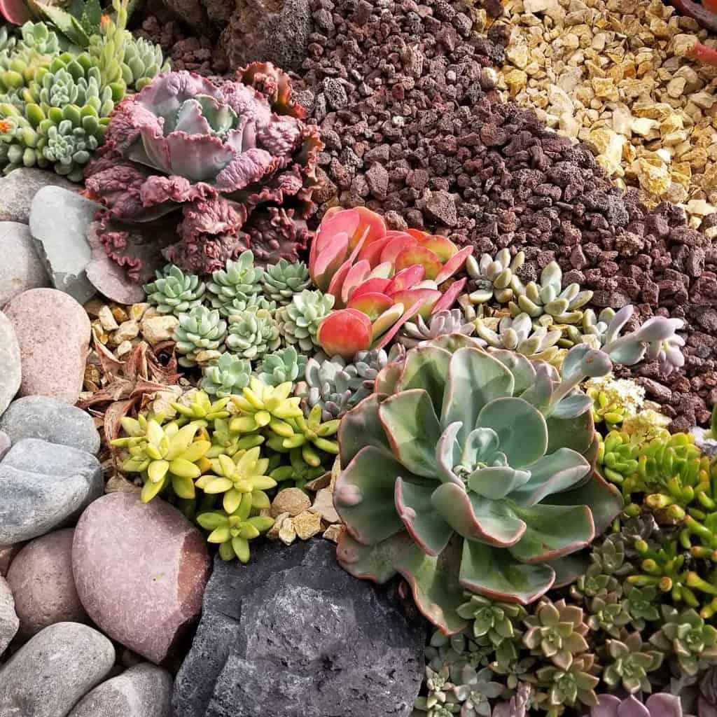 Landscape Succulent Garden Ideas -allpowerfulmomma