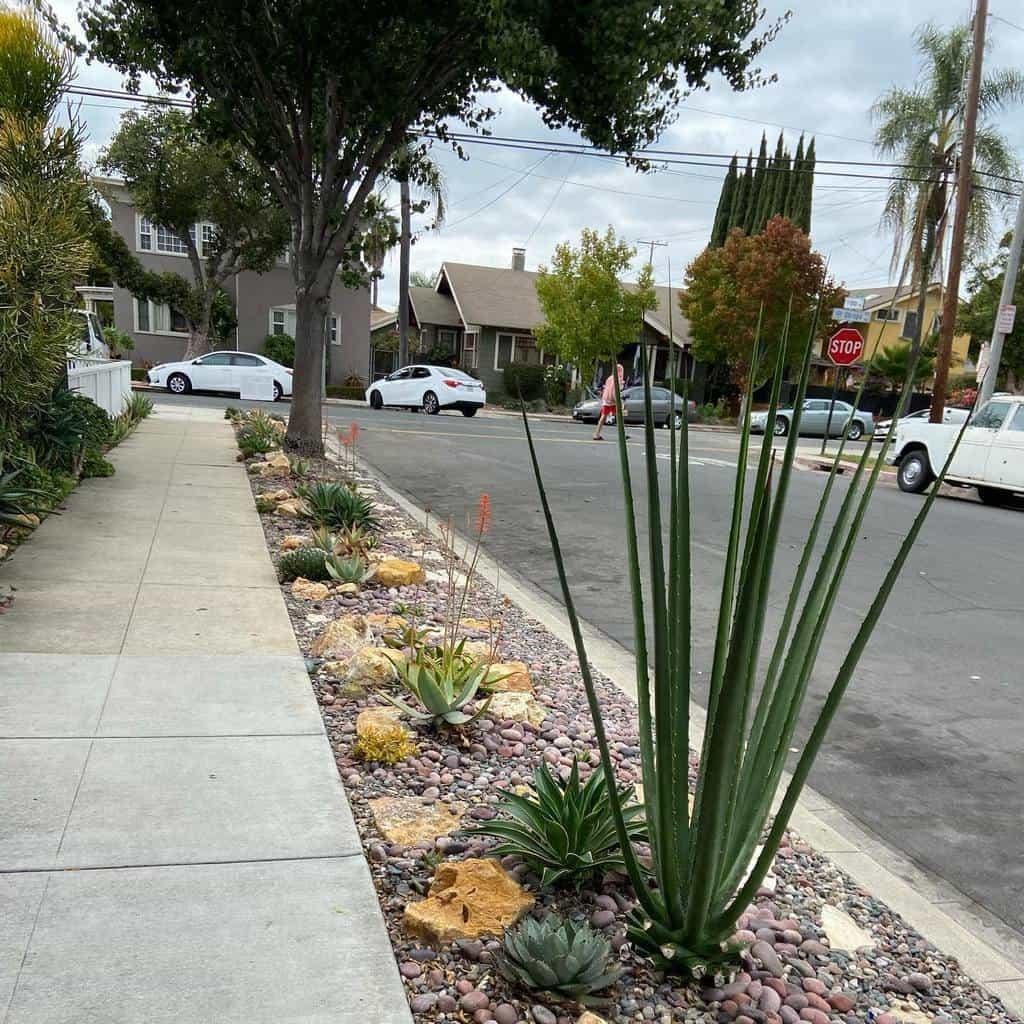 Landscape Succulent Garden Ideas -dr.cactus_man