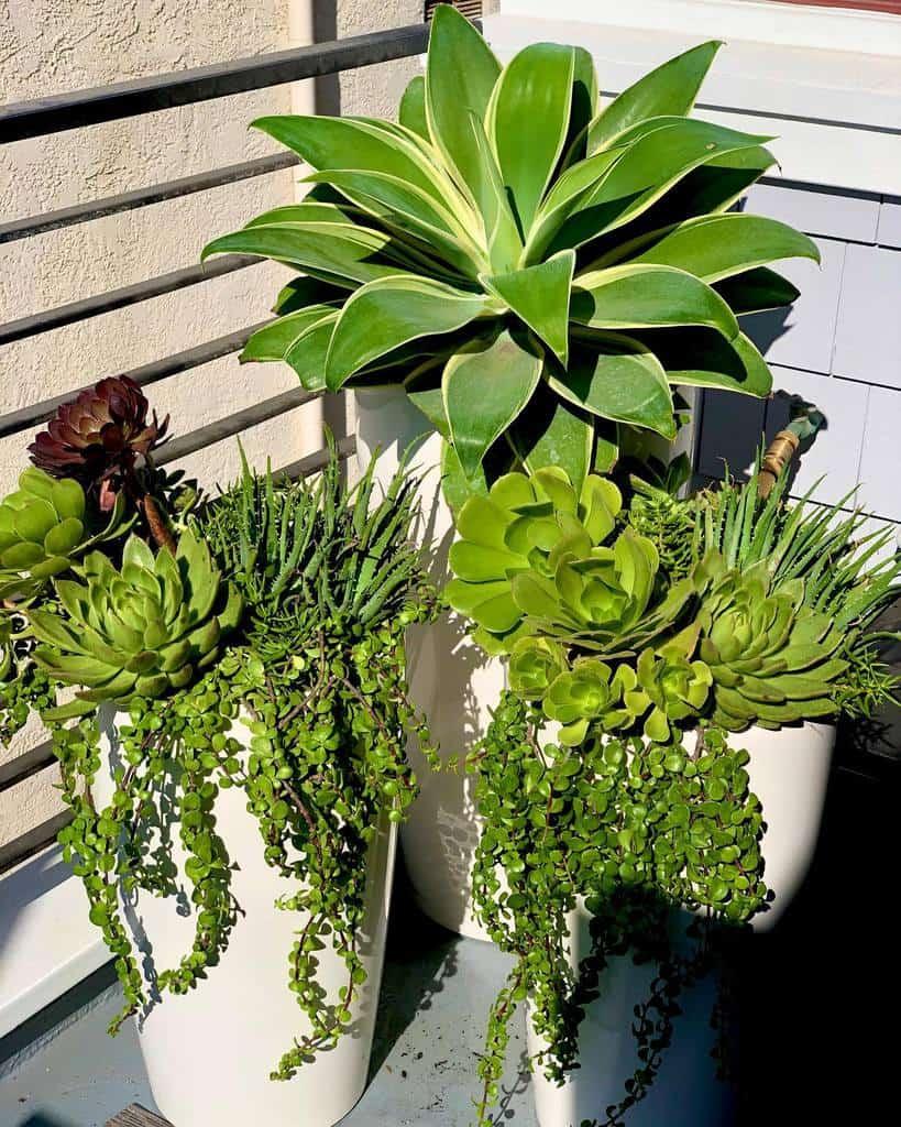 Planter Succulent Garden Ideas -lilla_bello
