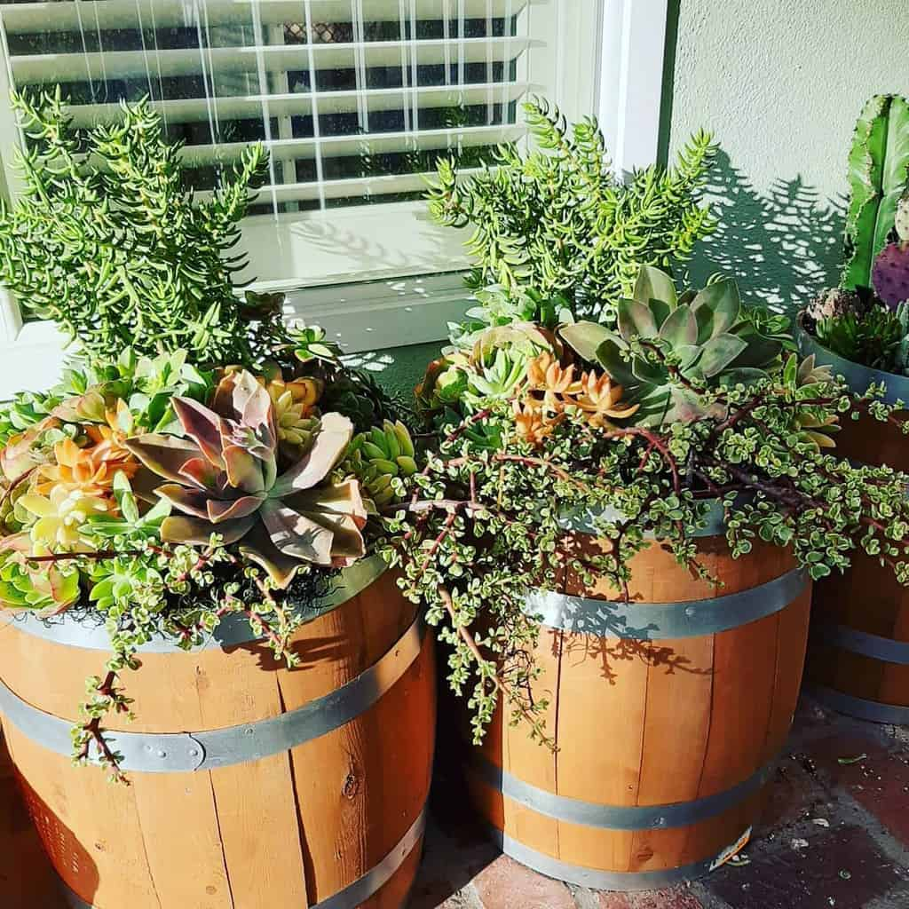 Planter Succulent Garden Ideas -succulentdesignsbyjoanna