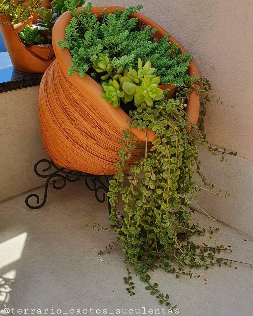 Planter Succulent Garden Ideas -terrario_cactos_suculentas