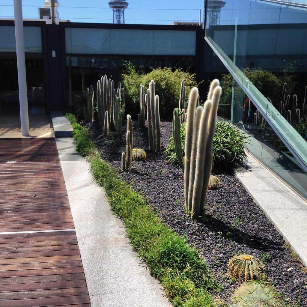 Plants Xeriscape Ideas -ac_greendesign