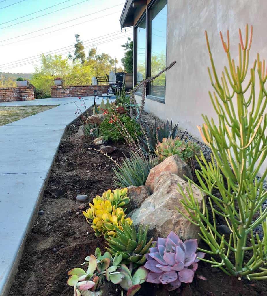 Plants Xeriscape Ideas -botanicalifornia