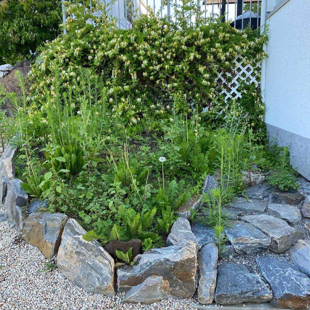 Plants Xeriscape Ideas -shawnawhitfield