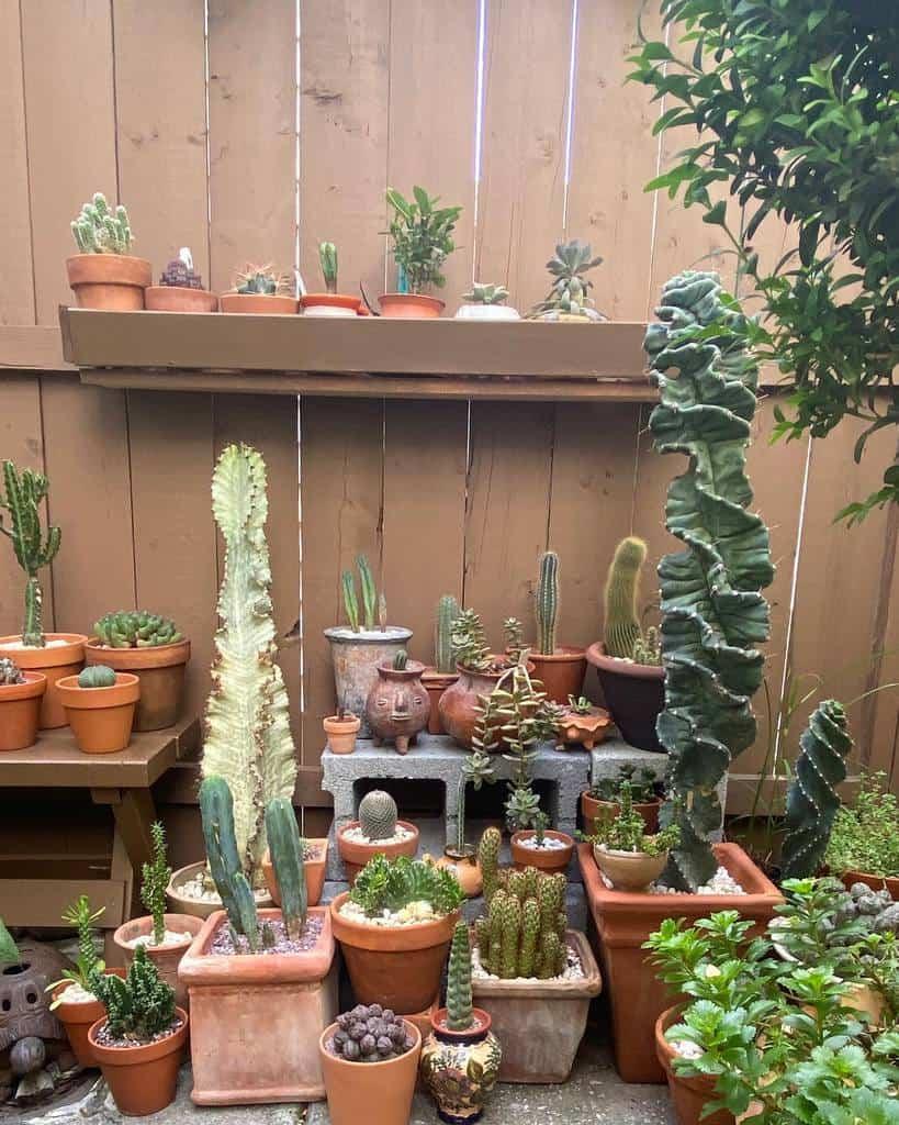 Potted Succulents Garden Ideas -pcalingo