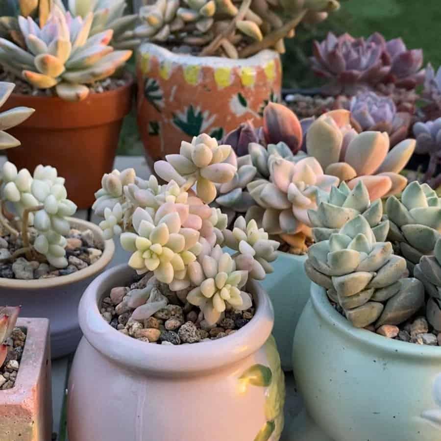 Potted Succulents Garden Ideas -soulfulsucculents_