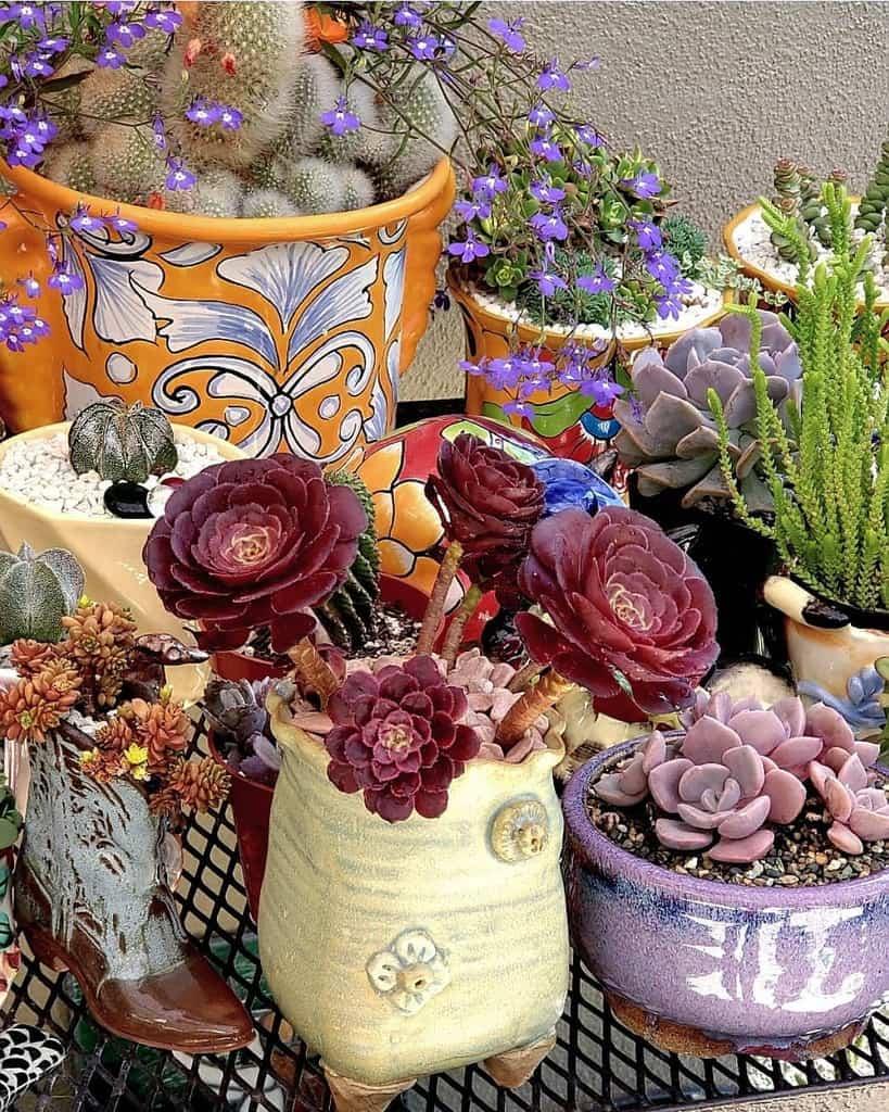 Potted Succulents Garden Ideas -succulentloveaffair