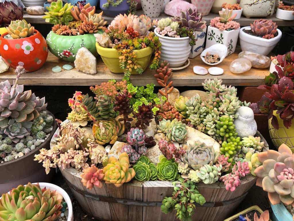Succulent Garden Arrangement Ideas -s.is.for.succulents