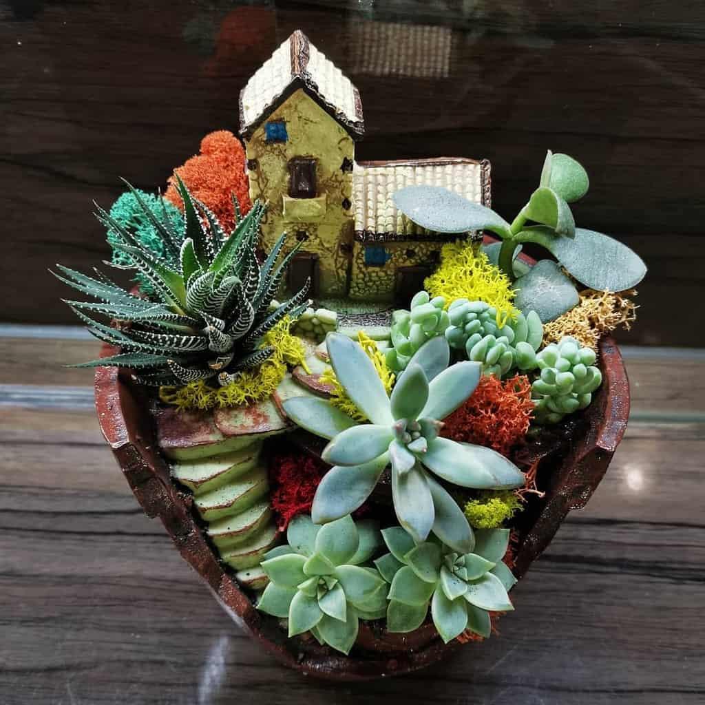 Succulent Garden Arrangement Ideas -sakhflora_buket_podarok