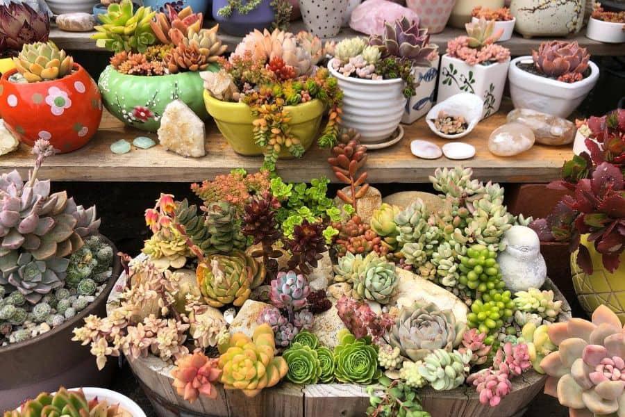 The Top 78 Succulent Garden Ideas