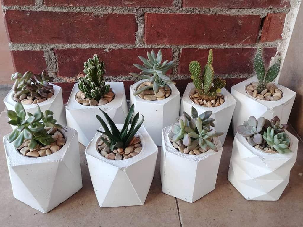 Terrarium Succulent Garden Ideas -azucenablanca.suculentas