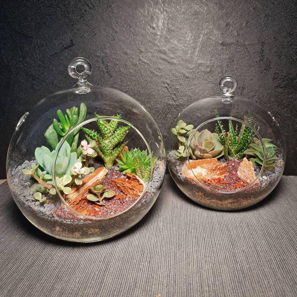 Terrarium Succulent Garden Ideas -minitropika