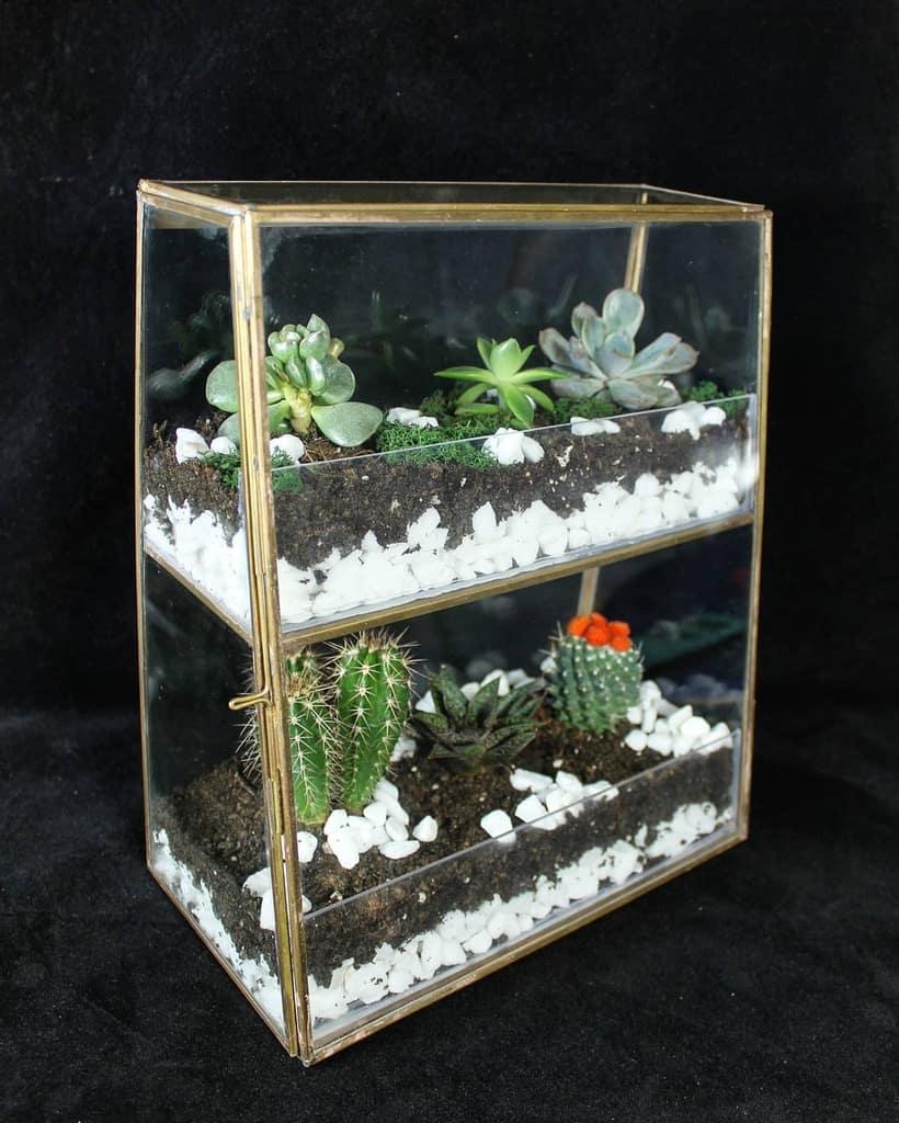 Terrarium Succulent Garden Ideas -terrarisis