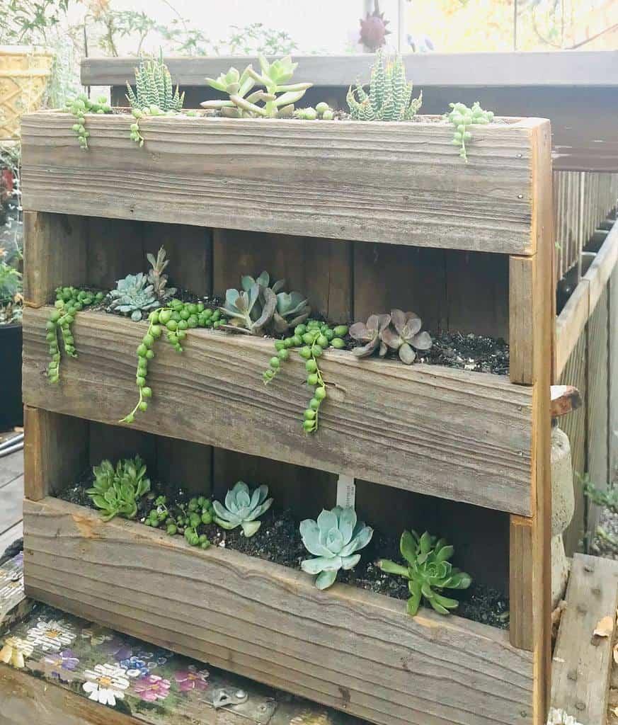 Vertical Succulent Garden Ideas -anitadarling717
