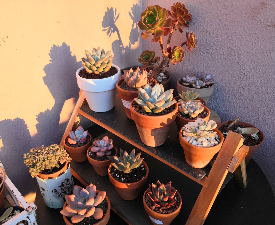 Vertical Succulent Garden Ideas -cococats_