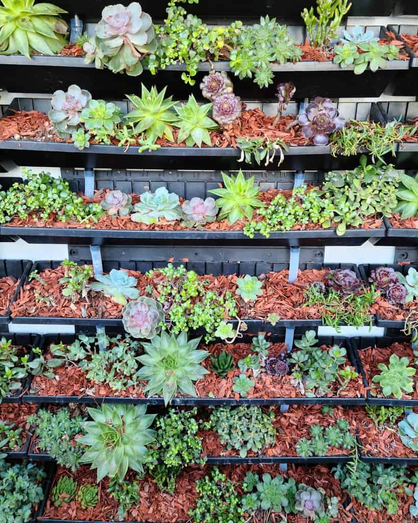 Vertical Succulent Garden Ideas -finaleefloralcakes