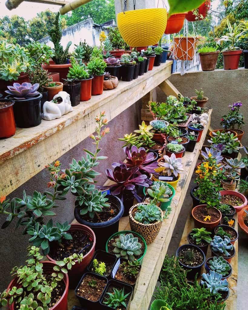 Vertical Succulent Garden Ideas -myleisuretimes