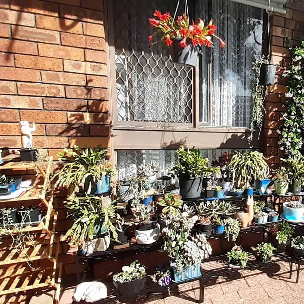 Vertical Succulent Garden Ideas -succulentessa