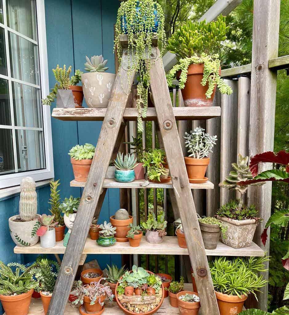 Vertical Succulent Garden Ideas -succulentsuz