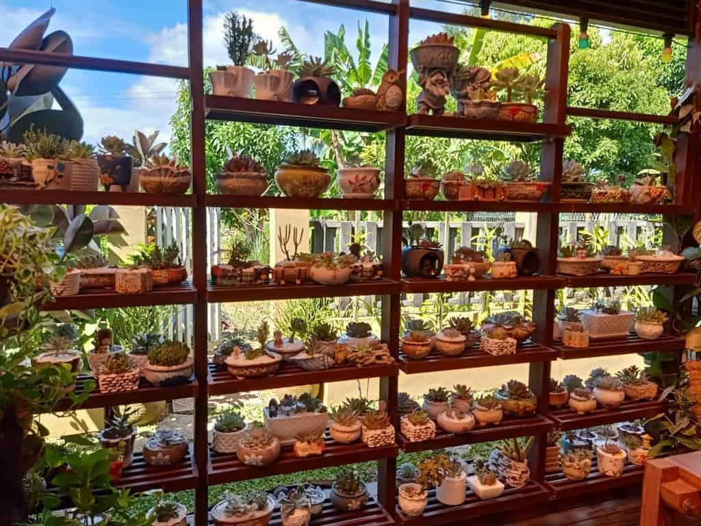 Vertical Succulent Garden Ideas -sweetiesucculents.kuching