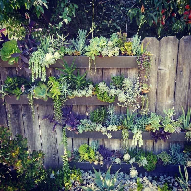 Wall Succulent Garden Ideas -homestead_withmrsphish