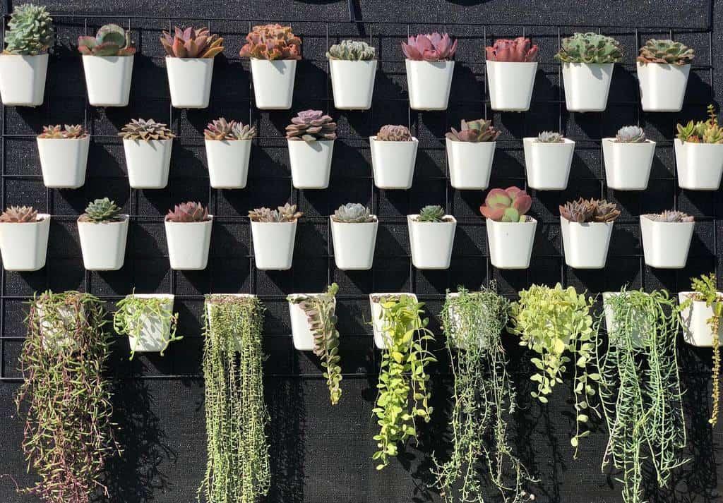 Wall Succulent Garden Ideas -howzitgrowin