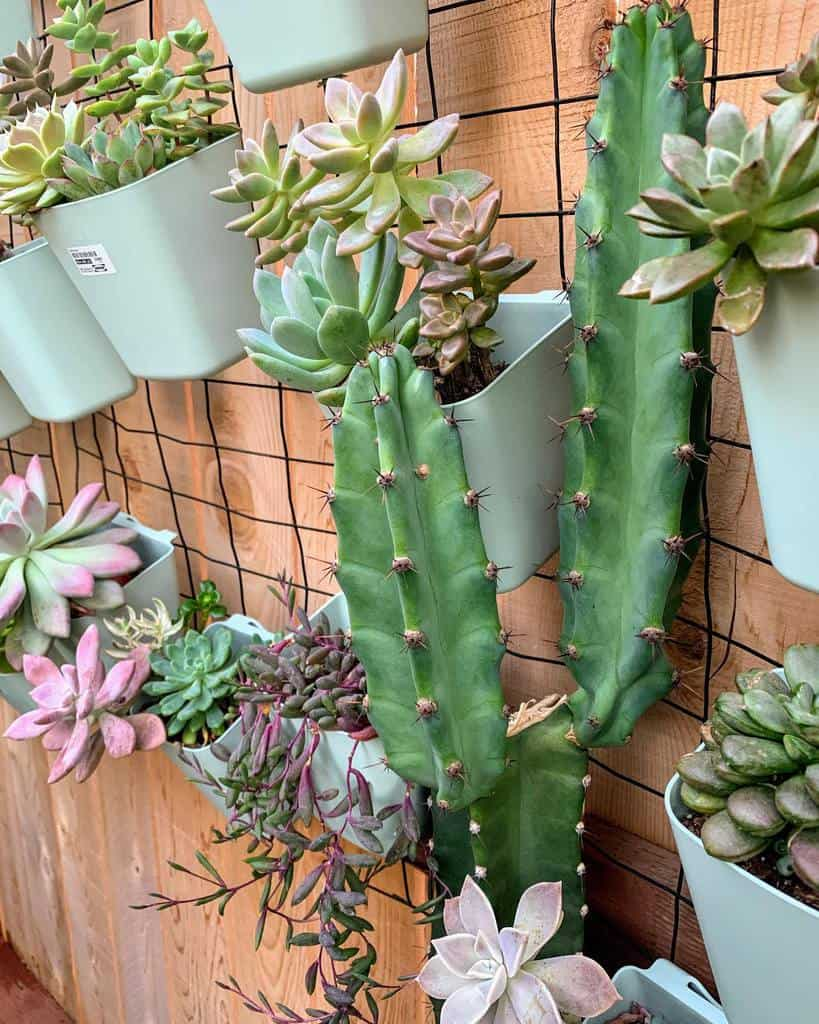 Wall Succulent Garden Ideas -succylife0518