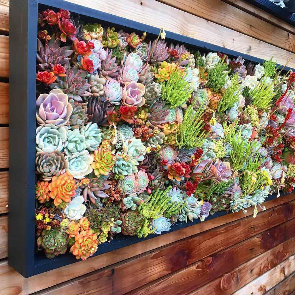 Wall Succulent Garden Ideas -tcslye