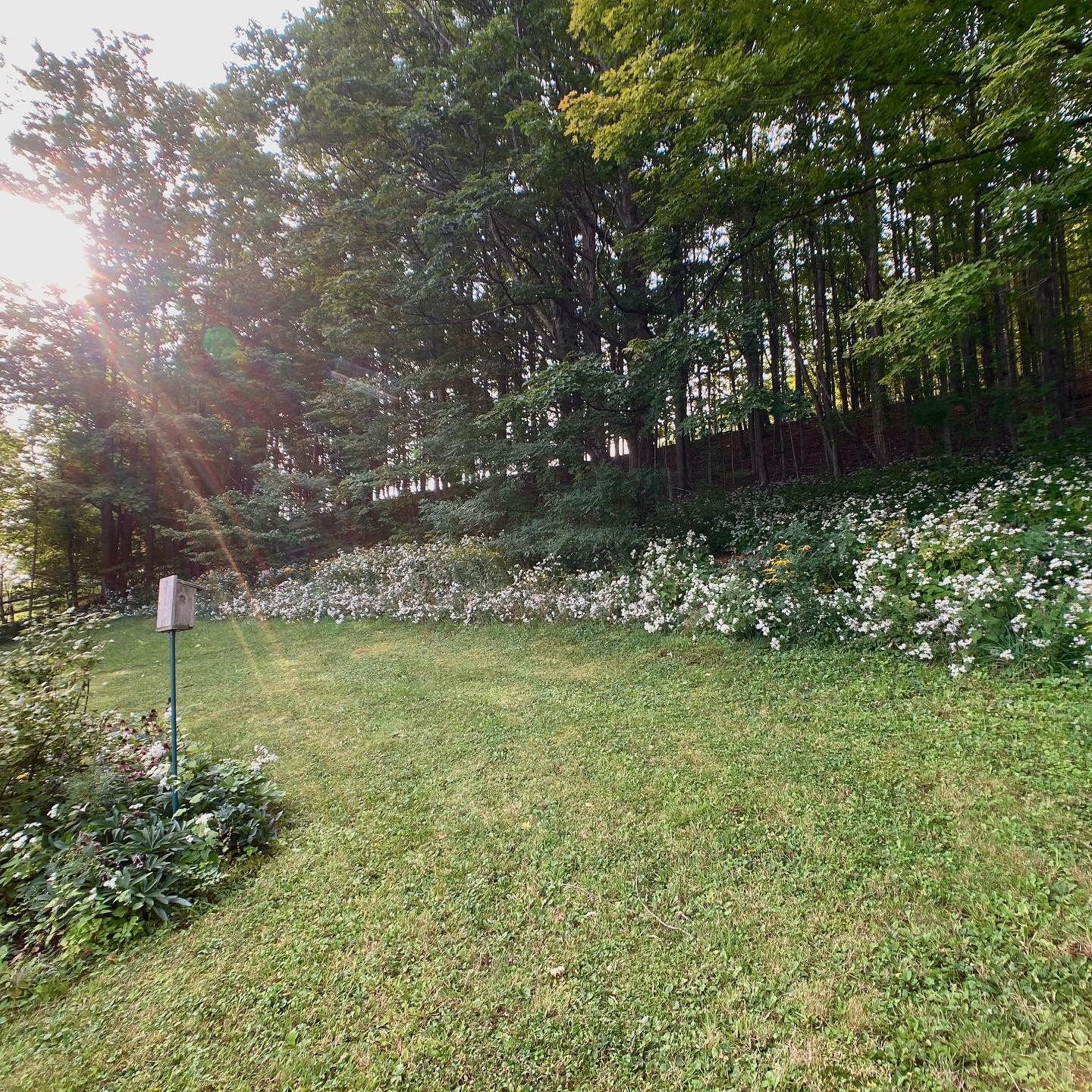 Country Low Maintenance Landscaping Ideas -aubynlandscapes