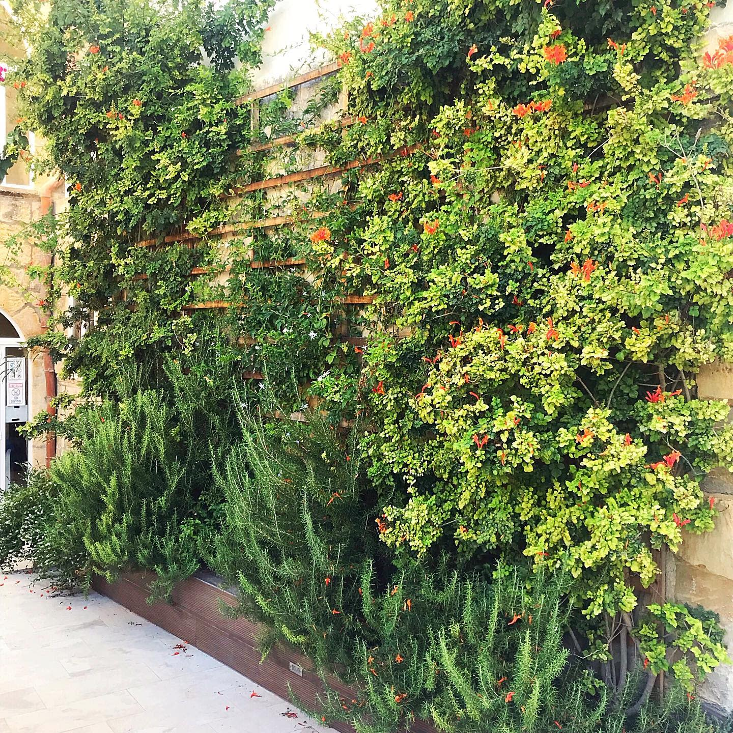 Plant Outdoor Wall Decor Ideas -s.l.f_home