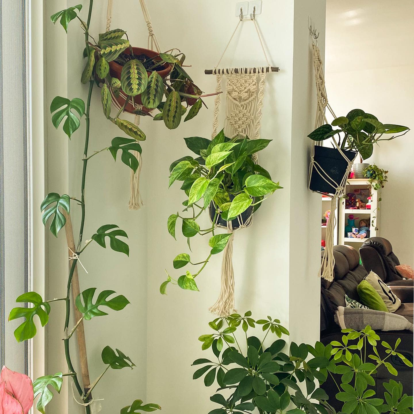 Hanging Container Garden Ideas -plantmomma_gyn