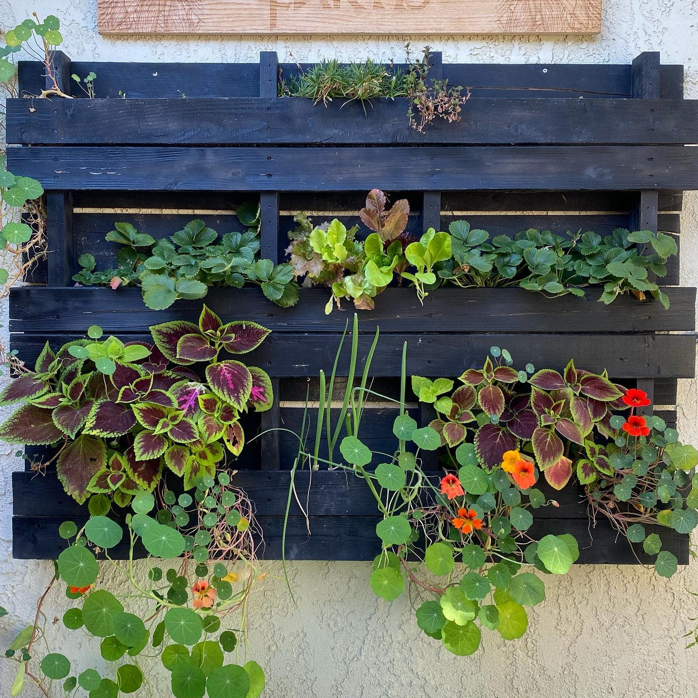 Pallet Container Garden Ideas -succulents.and.sunflowers
