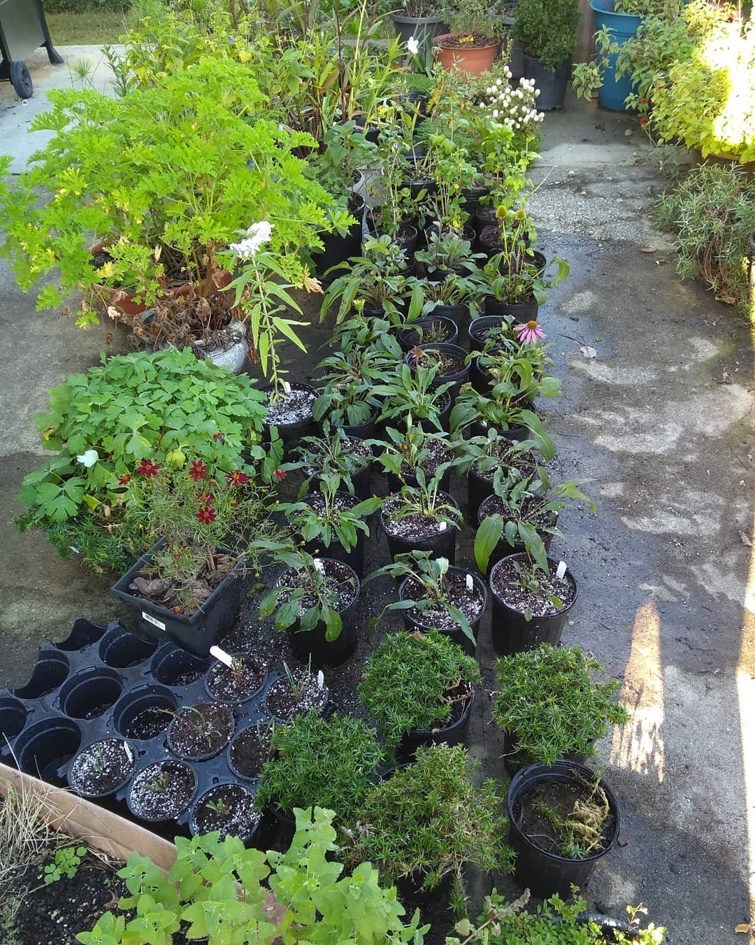 Plant Container Garden Ideas -laceyoakesflowers