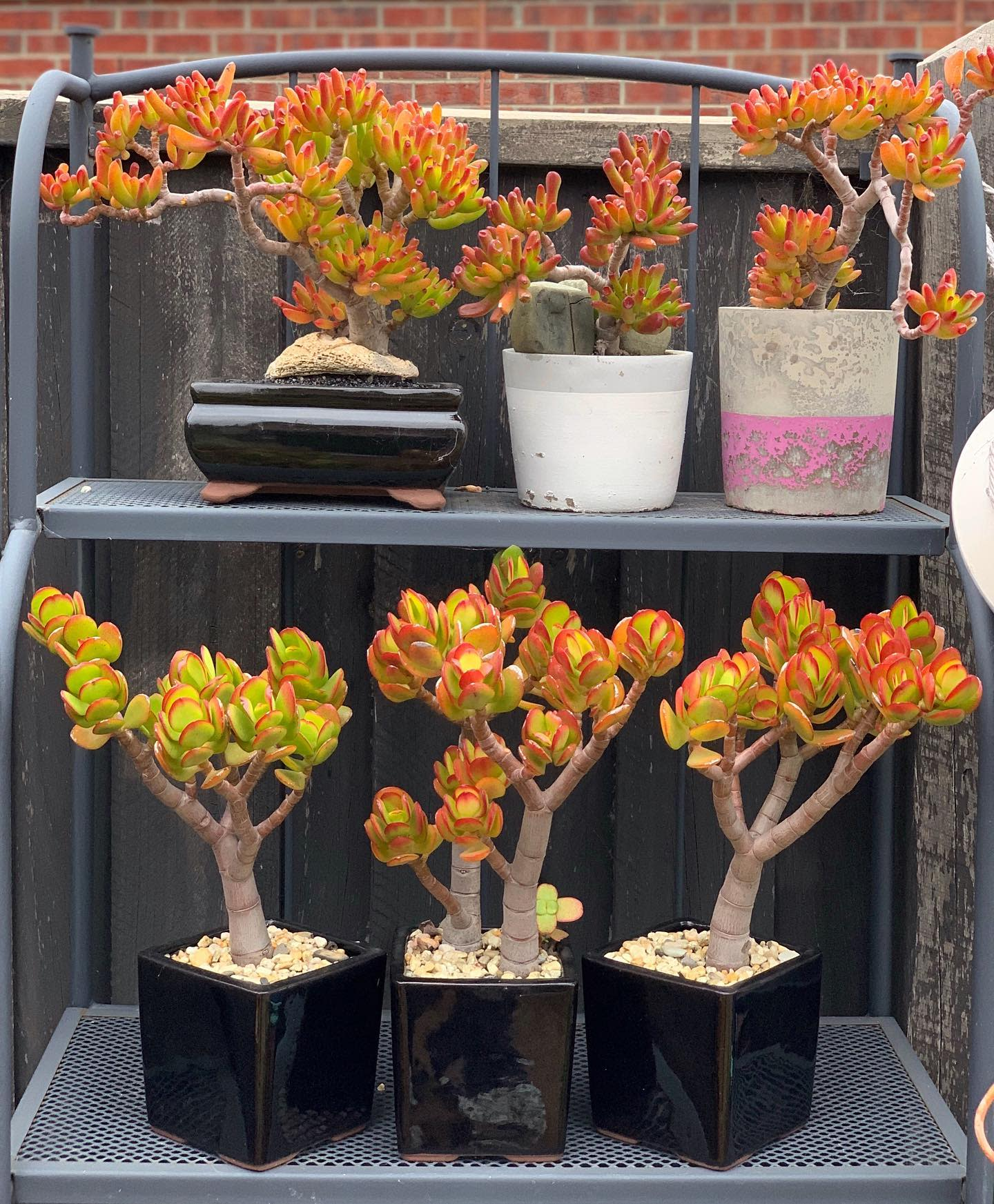 Sucullent Container Garden Ideas -greenhues