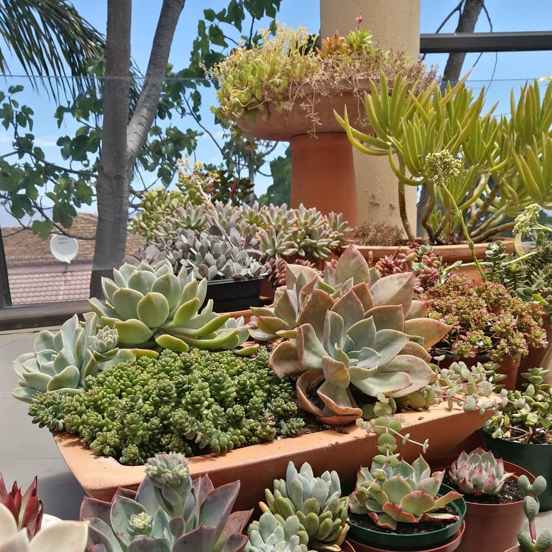 Sucullent Container Garden Ideas -plantifiedhome
