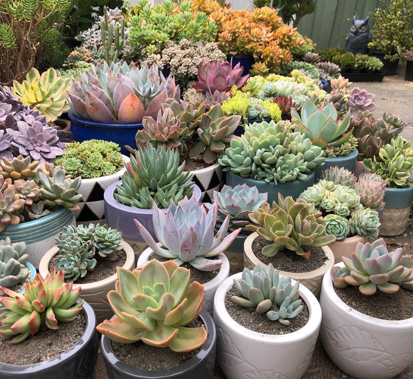Sucullent Container Garden Ideas -s.is.for.succulents
